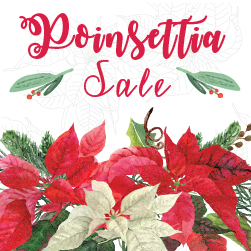 Poinsettia Sale Pick Up